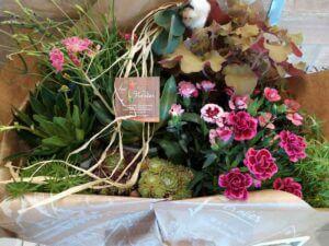 11 Aux floralies